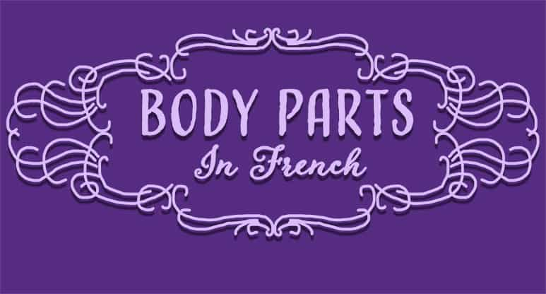 Body Parts in French